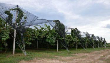 «Δίχτυα» προστασίας από τις φυσικές καταστροφές