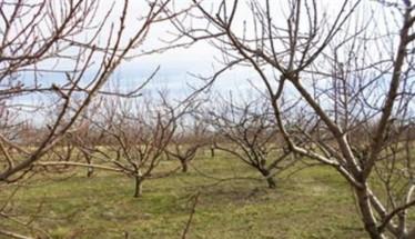 Ανακοίνωση του ΕΛ.Γ.Α. για την παράταση υποβολής Οριστικής Δήλωσης για τον παγετό της 17ης Μαρτίου