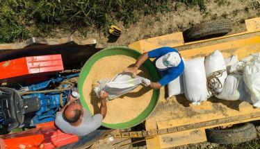 ΟΠΕΚΕΠΕ: Το χρονοδιάγραμμα πληρωμών για τις αγροτικές επιδοτήσεις