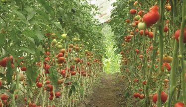 Ιταλία: Παίρνεις επίδομα ανεργίας; Θα μαζέψεις φρούτα!
