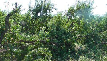 Τα αιτήματα του Αγροτικού  Συλλόγου Ημαθίας μετά τις καταστροφές από την χαλαζόπτωση και την ισχυρή ανεμοθύελλα