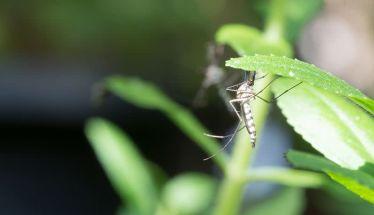 Επαναληπτικός ψεκασμός στον οικισμό Μέσης για την αντιμετώπιση των ακμαίων κουνουπιών - Οδηγίες προς τους κατοίκους