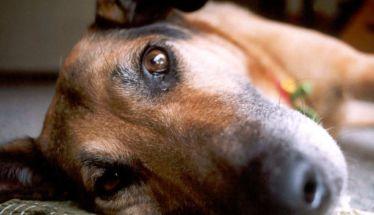 Κιλκίς: 30.000 ευρώ πρόστιμο σε κτηνοτρόφο που πυροβόλησε σκύλο