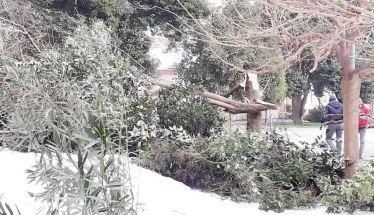 Έπεσε δέντρο στο προαύλιο του Αγ. Αντωνίου,  από τον χιονιά