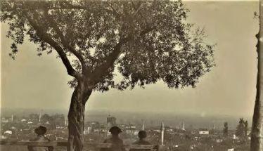 Γερασμένα δένδρα... αλλά με φορτίο πολιτισμού!!! *Του Πάρη Παπακανάκη