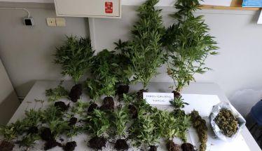 Είχε φτιάξει ειδικό χώρο και καλλιεργούσε ναρκωτικά στην Ημαθία!