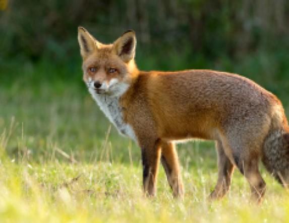 Εναέρια ρίψη εμβολίων-δολωμάτων κατά της λύσσας στην Αγκαθιά, Κυψέλη, Πρασινάδα Πλάτανο και Κλειδί