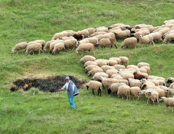 To Τμήμα Κτηνιατρικής Π.Ε. Ημαθίας ενημερώνει τους κτηνοτρόφους για τον καταρροϊκό πυρετό στα πρόβατα