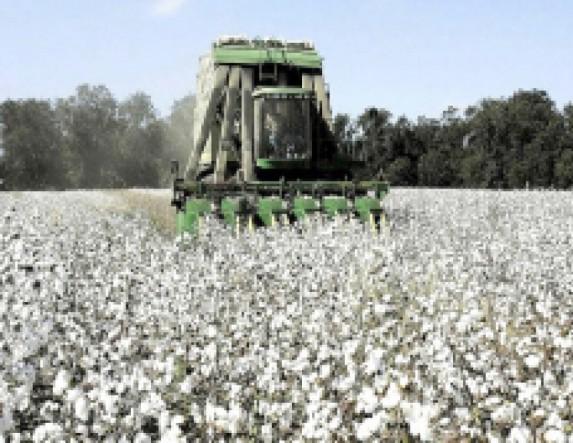 Προειδοποιήσεις  της Π.Ε Ημαθίας  προς βαμβακοπαραγωγούς