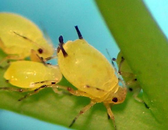 Ενημερωτική ημερίδα  για τους εντομολογικούς εχθρούς των καλλλιεργειών