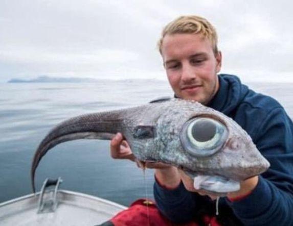 Το περίεργο ψάρι με την ονομασία ... Χίμαιρα από την ελληνική μυθολογία!