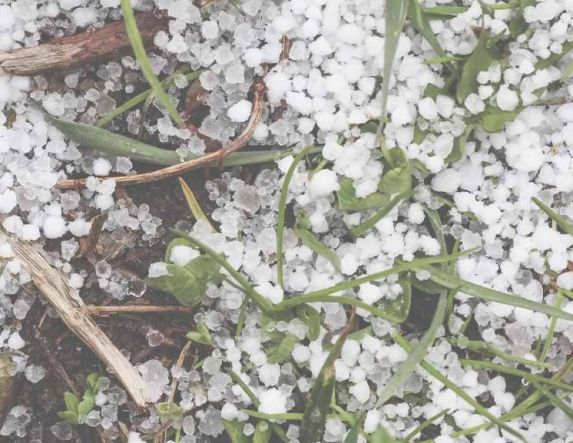 Σε ροδακινοκαλλιέργειες και αμπέλια χτύπησε η καταιγίδα και το χαλάζι, στην Ημαθία