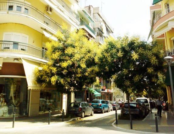 Μπήκαν  τα δέντρα μέσα στα σπίτια  της Μ. Αλεξάνδρου