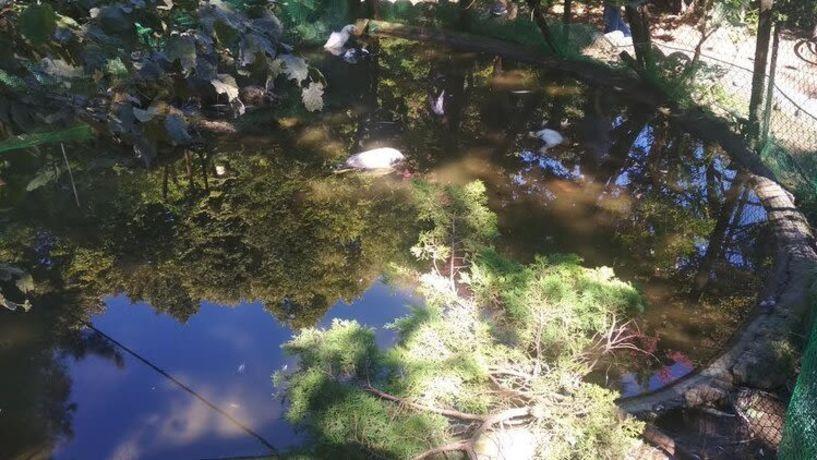 Κατακρεουργημένες βρέθηκαν 30 πάπιες στο δημοτικό πάρκο της Νάουσας -Σκληρές δηλώσεις και απαντήσεις μεταξύ των παρατάξεων Κουτσογιάννη και Καρανικόλα