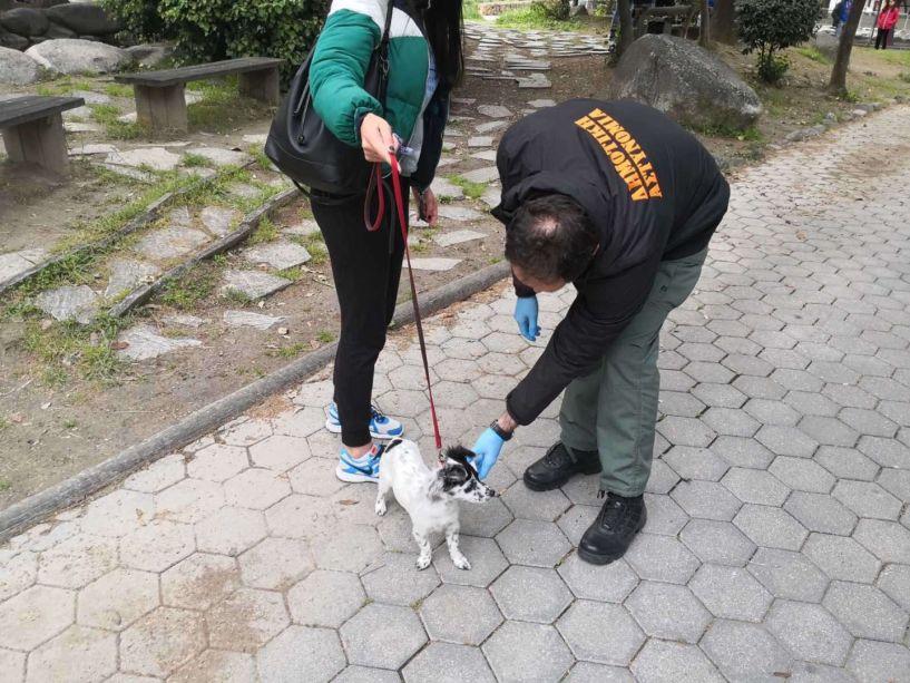 Ελέγχους για τα δεσποζόμενα ζώα ξεκινάει ο Δήμος Νάουσας