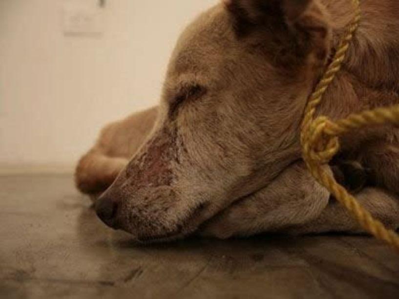 Ο ΥπΑΑΤ, Μάκης Βορίδης μετατρέπει το αδίκημα βασανισμού των ζώων σε κακούργημα