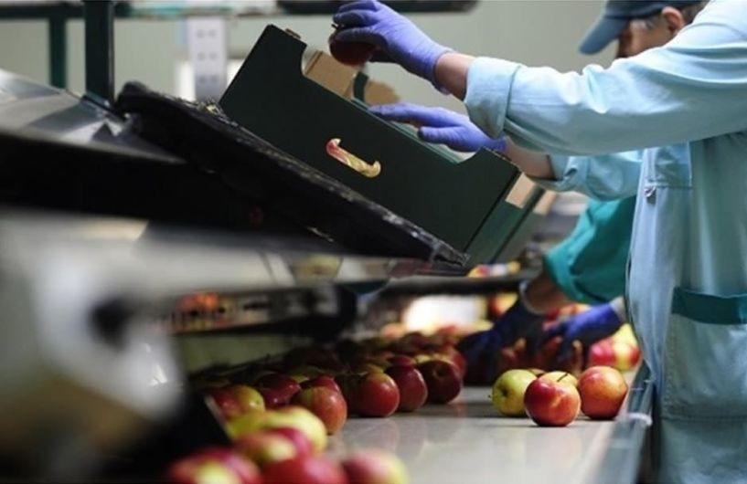 Συνδικάτο Τροφίμων και Ποτών Ημαθίας-Πέλλας: Να μην πληρώσουν τις συνέπειες των φετινών καταστροφών οι εργαζόμενοι