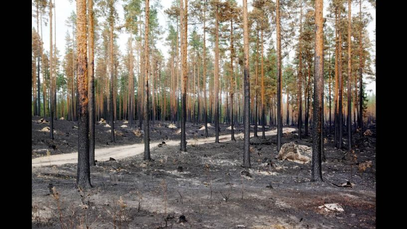 Στη Σουηδία έσβησαν τις φωτιές με... βόμβες!! -Δείτε το βίντεο