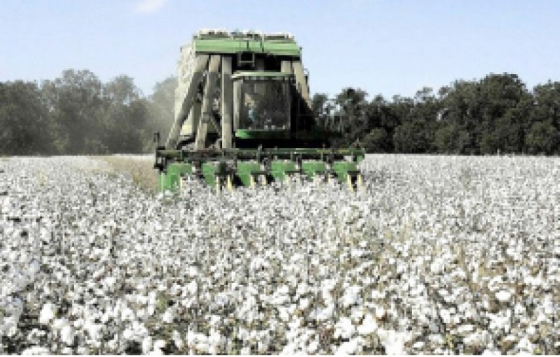 ΠΕΡΙΦΕΡΕΙΑΚΗ ΕΝΟΤΗΤΑ ΗΜΑΘΙΑΣ -  Γεωργικές προειδοποιήσεις  ολοκληρωμένης  φυτοπροστασίας  στη βαμβακοκαλλιέργεια