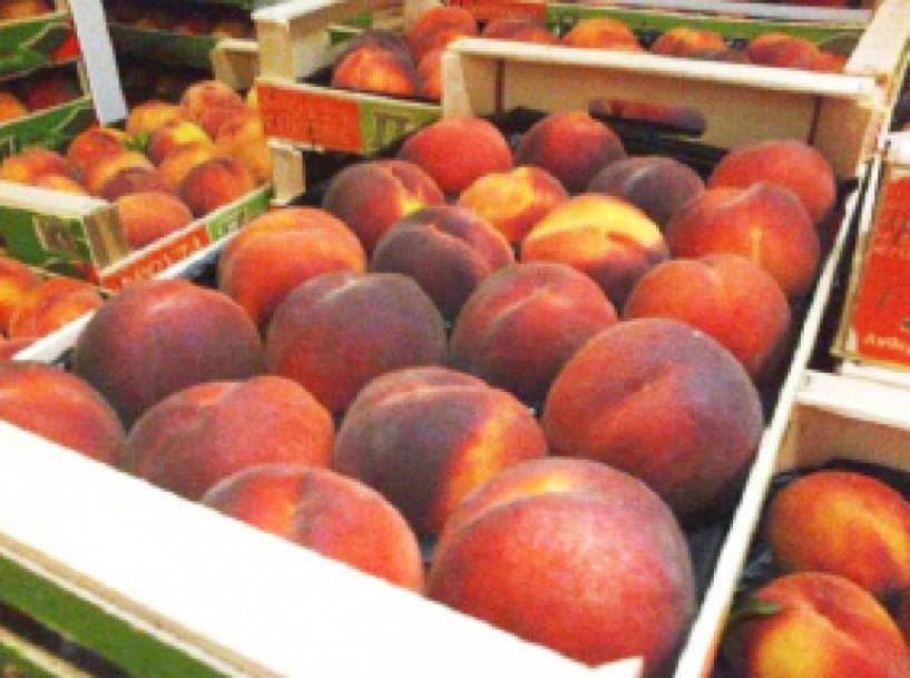 Aυξημένες οι εξαγωγές φρούτων με πρώτο το ροδάκινο
