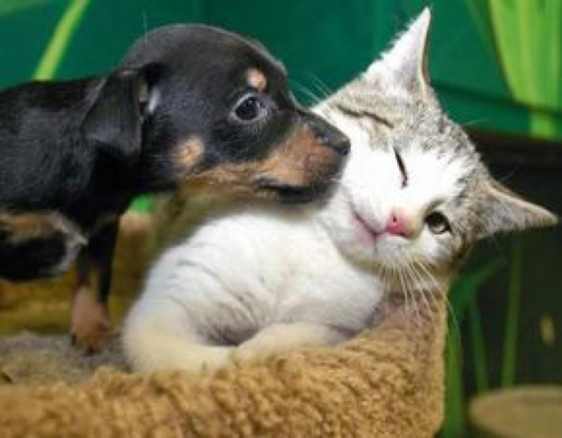 Μαζικές στειρώσεις ζώων στον δήμο Βέροιας 3-6 Νοεμβρίου