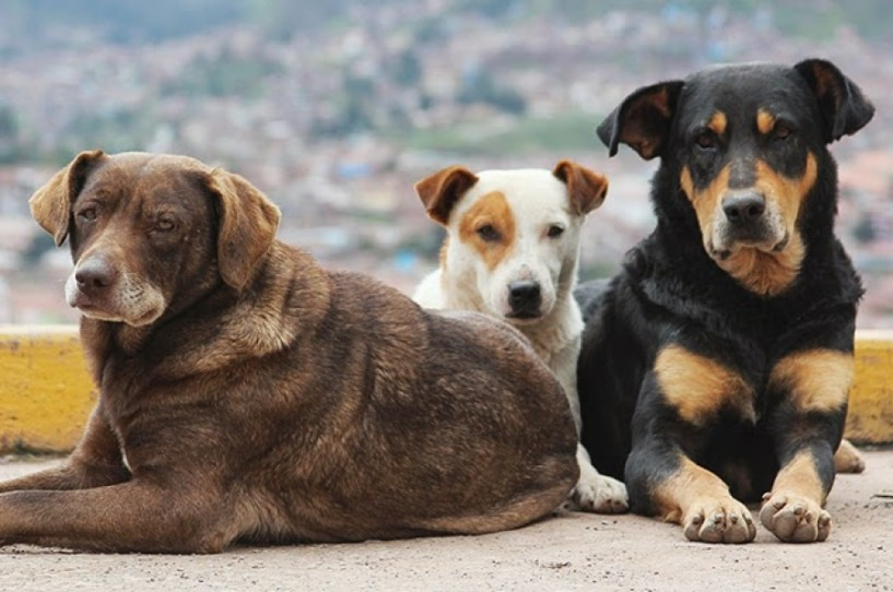 372.000 ευρώ στο Δήμο Νάουσας για κατασκευή καταφυγίου αδέσποτων ζώων