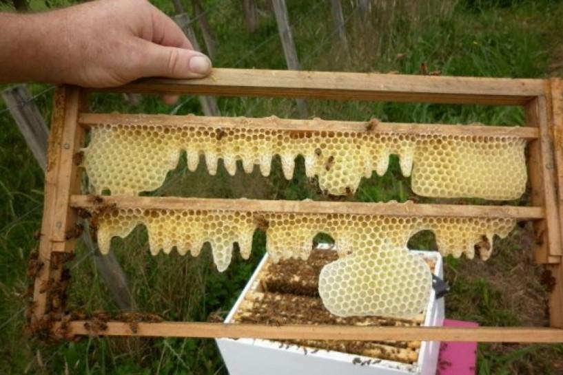 Εορταστικές εκδηλώσεις προς τιμήν του προστάτη των μελισσοκόμων Αγίου Φιλαρέτου