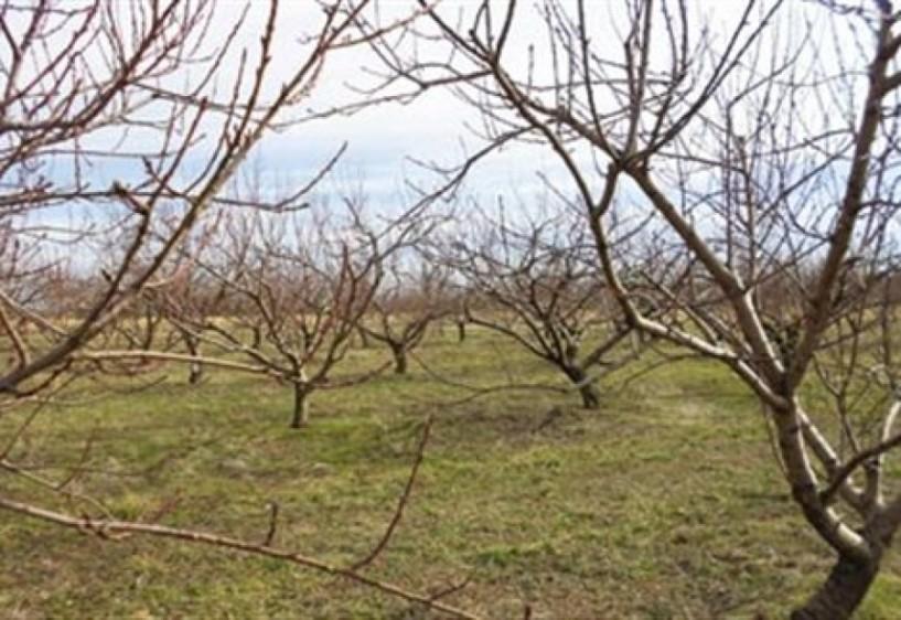 Αναγγελία ζημιάς από παγετό στον δήμο Βέροιας