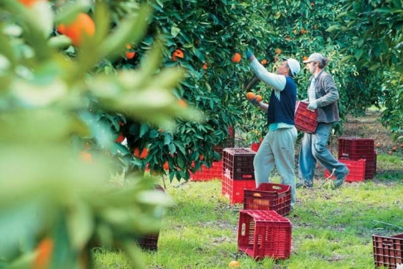 Υποβολή προτάσεων για το πρόγραμμα «στήριξη για επενδύσεις σε γεωργικές εκμεταλλεύσεις-σχέδια βελτίωσης