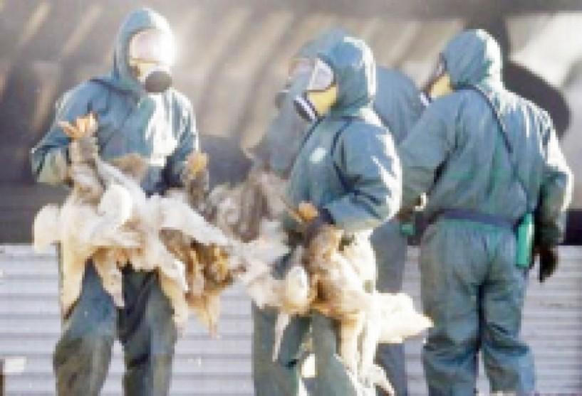 Το Τμήμα Κτηνιατρικής της Π.Ε. Ημαθίας ενημερώνει για τη γρίπη των πτηνών