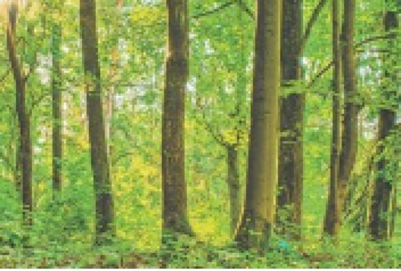 Εως και τις 7 Μαΐου - Παράταση 45 ημερών για υποβολή αντιρρήσεων στους δασικούς χάρτες