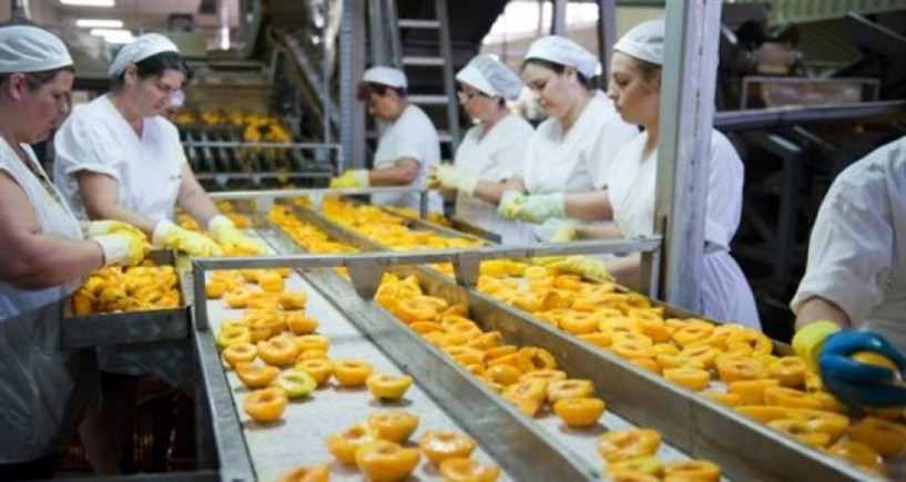 Η θέση μας - Εποχικό μεροκάματο στα κονσερβοποιεία και κάρτα ανεργίας