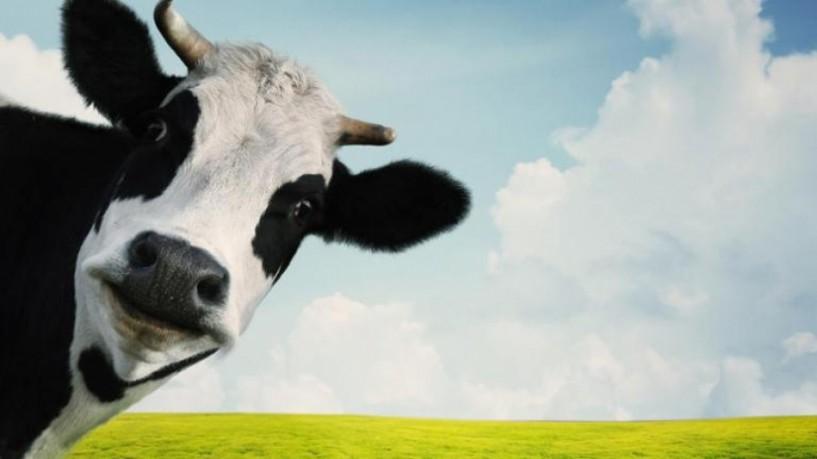 Η θέση μας - Η... αγελάδα που παράγει