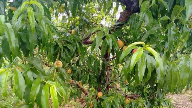 Προβληματίζει η βροχόπτωση τους αγρότες