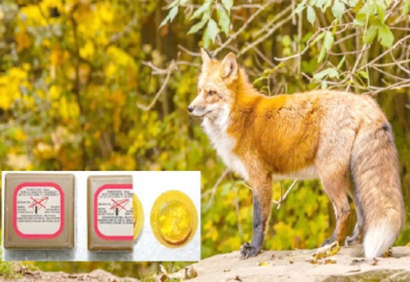 ΣΤΟ ΔΗΜΟ ΒΕΡΟΙΑΣ - Εμβολιασμός  των κόκκινων  αλεπούδων με εμβόλια κατά της λύσσας