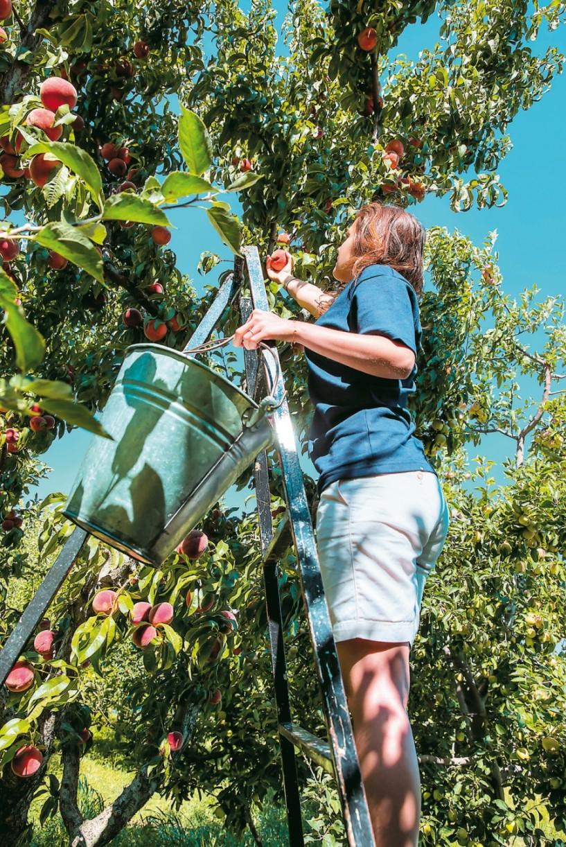 Η αγροτική οικονομία της Ημαθίας στο επίκεντρο πολλαπλών εκδηλώσεων