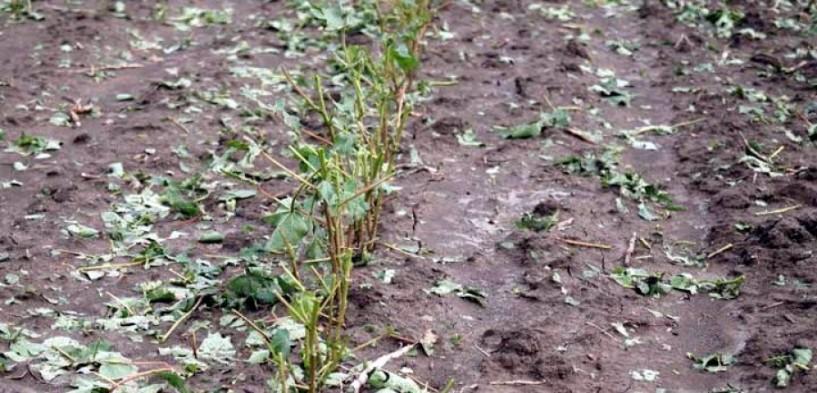 10.000 στρέμματα η έκταση της καταστροφής στην περιοχή Αλεξάνδρειας