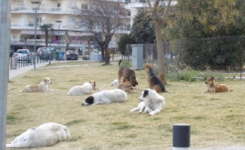 Ολοκληρώθηκε στο Δημοτικό   κυνοκομείο Βέροιας, το πρόγραμμα μαζικών στειρώσεων αδέσποτων ζώων