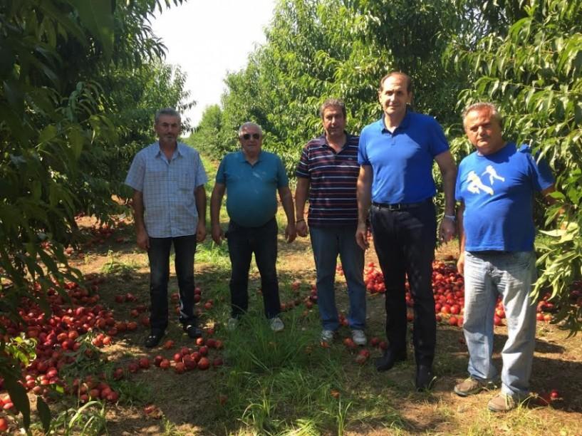 Απ. Βεσυρόπουλος: Το υπουργείο Αγροτικής Ανάπτυξης και ο ΕΛΓΑ οφείλουν να αναλάβουν τις ευθύνες τους και να αποζημιώσουν τους πληγέντες παραγωγούς