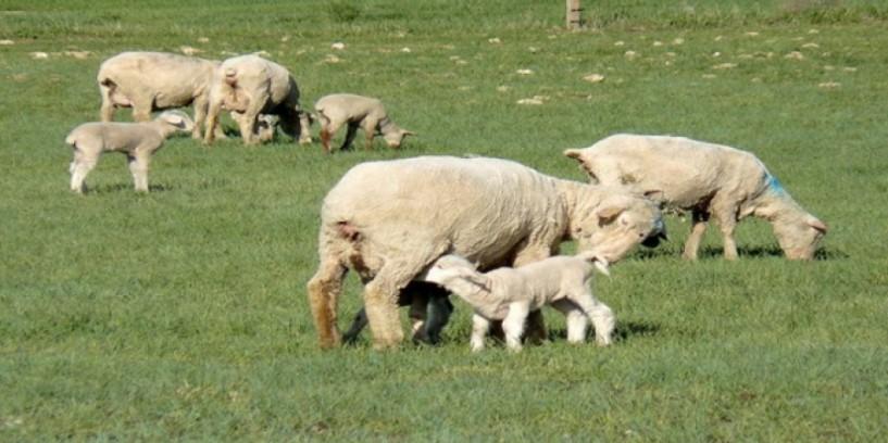 Επικαιροποίησαν τα αιτήματά τους για Διεπαγγελματική Φέτας και αυξήσεις τιμών στο γάλα οι κτηνοτρόφοι