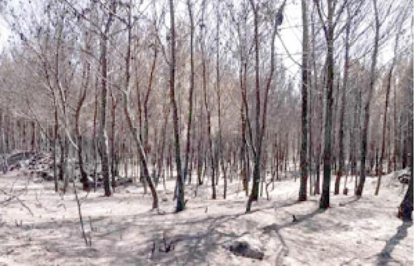 Σωκρ. Φάμελλος:  Άμεσα αναδασωτέες  όλες οι καμένες περιοχές