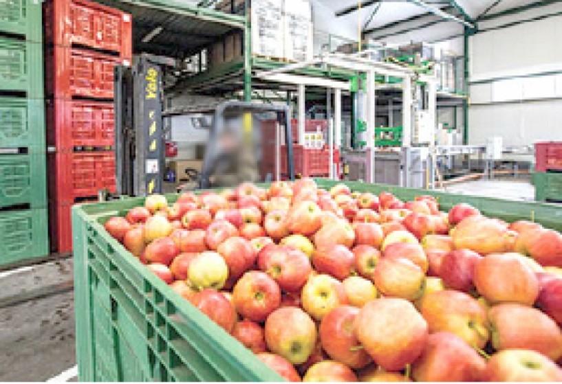 Προβλεπόμενη  παραγωγή μήλων διαφόρων  χωρών του τρέχοντος έτους