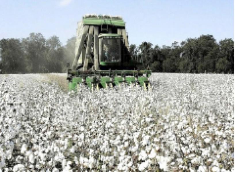Εννέα προτάσεις της Διεπαγγελματικής Οργάνωσης Βάμβακος προς τους βαμβακοπαραγωγούς και τους εκκοκκιστές ενόψει της περιόδου συγκομιδής