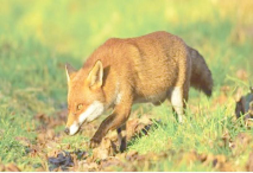 Την Τρίτη 3 Ιουλίου - Ομιλία για τη λύσσα στην Αλεξάνδρεια