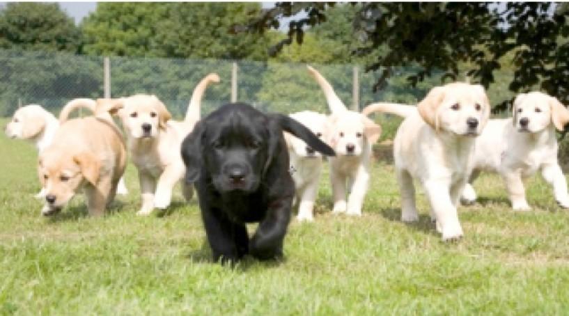 Από τον Δήμο Βέροιας  - Μήνυμα ευαισθητοποίησης του κοινού  για την προστασία των ζώων