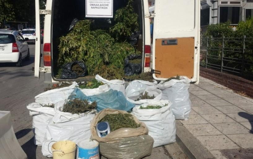 Μεγάλη επιτυχία της Ομάδας Δίωξης Ναρκωτικών Βέροιας  --Εντόπισε και κατέσχεσε 790 δενδρύλλια και 87 κιλά ακατέργαστης κάνναβης (Ηχητικό)