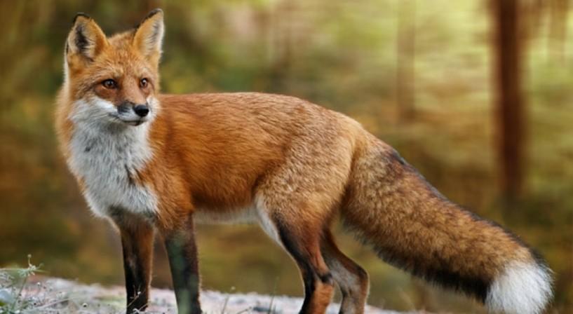 Σε ποιες περιοχές της Ημαθίας θα πραγματοποιηθεί εναέρια ρίψη εμβολίων-δολωμάτων κατά της λύσσας