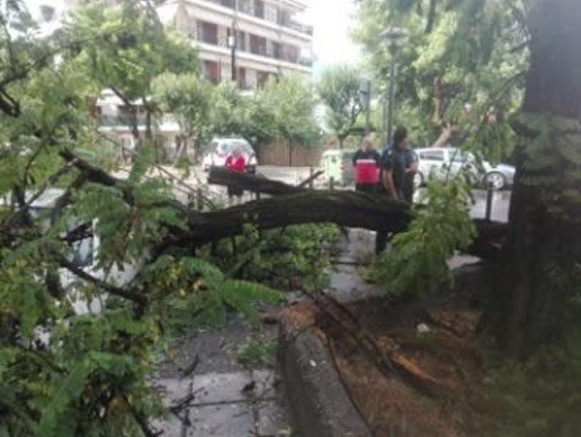 Πτώσεις δέντρων και ζημιές, από σφοδρή καταιγίδα με χαλάζι, το απόγευμα στη Βέροια (φωτο)