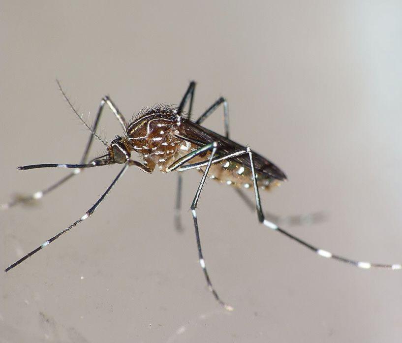 Έκτακτη ανακοίνωση: Ψεκασμοί απόψε το βράδυ στις Τ.Κ. Κουλούρας και Νέας Νικομήδειας για την αντιμετώπιση των ακμαίων κουνουπιών