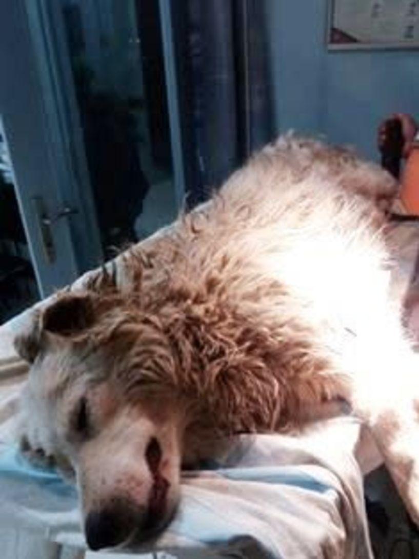 Πυροβόλησαν σκυλί με σκάγια διασποράς! - Εργαζόμενοι από την Πρωτοβουλία για το Παιδί ενημέρωσαν το Σύλλογο Ζωόφιλων Ημαθίας